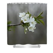Branch Of Spring Shower Curtain