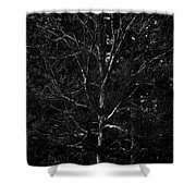 Branch Patterns Shower Curtain