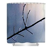Branch  Web And Dew Shower Curtain