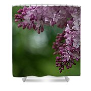 Branch With Spring Lilac Flowers Shower Curtain