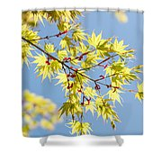 Branche In Springtime Shower Curtain