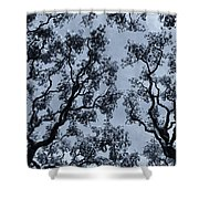 Branches Across Shower Curtain