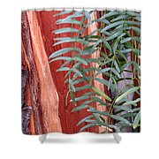 Branches And Bark Shower Curtain