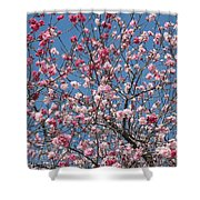 Branches And Blossoms Shower Curtain