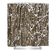 Branches And Twigs Covered In Fresh Snow Shower Curtain