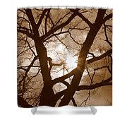 Branches In The Dark 2 Shower Curtain