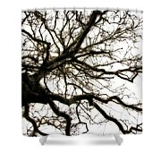 Branches Shower Curtain