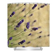 Branches Of Flowering Lavender Shower Curtain