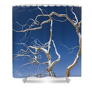 Branches Of Silver Shower Curtain by Steven Bateson