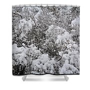 Branches Of Snow Shower Curtain