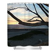 Branches Over The Beach Shower Curtain