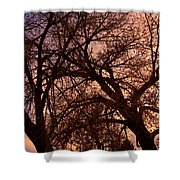 Branching Out At Sunset Shower Curtain