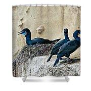 Brandts Cormorant Nesting On Cliff Shower Curtain