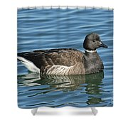Brant On Calm Water Shower Curtain