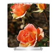 Brass Band Roses In Autumn Shower Curtain
