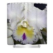 Brassocattleya Orchid 5292 Shower Curtain