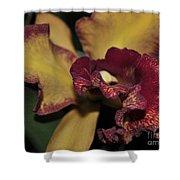 Brassolaeliocattleya Melinda Wheeler Halcyon Shower Curtain