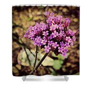 Brazilian Verbena Shower Curtain