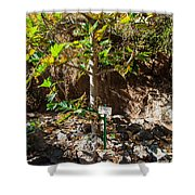 Breadfruit Tree Shower Curtain