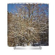 Break Under A Large Tree - Sunny Winter Day Shower Curtain by Matthias Hauser
