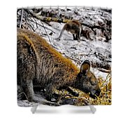 Breakfast Together Shower Curtain