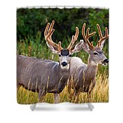 Breakfast With Friends Shower Curtain