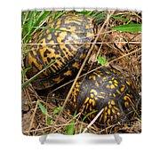 Breeding Box Turtles Shower Curtain