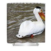Breeding Plumage Shower Curtain