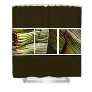 Breeze - Banana Leaf Triptych Shower Curtain
