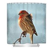 Breezy Morning Housefinch Shower Curtain
