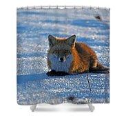 Brer Fox Shower Curtain