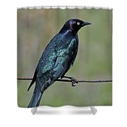 Brewers Blackbird Shower Curtain