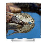 Brewers Sparrow At Waterhole Shower Curtain