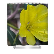Bridges Evening Primrose Shower Curtain