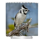 Bridled Titmouse Shower Curtain
