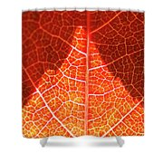 Bright And Dark Shower Curtain