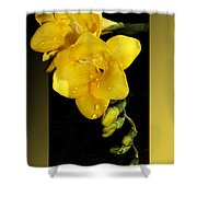Bright And Yellow Shower Curtain