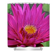 Bright Beauty Shower Curtain