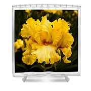 Bright Bright Spring Yellow Iris Flower Fine Art Photography Print  Shower Curtain