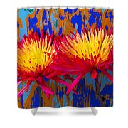 Bright Colorful Mums Shower Curtain