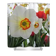 Bright Daffodils Shower Curtain