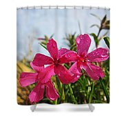 Bright Phlox Blooms Shower Curtain
