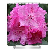 Bright Pink Blossoms Shower Curtain