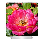 Bright Pink Rose Shower Curtain