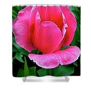 Bright Pink Tulip In Kuekenhof Flower Park-netherlands Shower Curtain