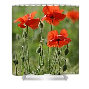 Bright Poppies 1 Shower Curtain