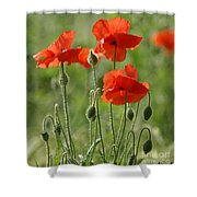 Bright Poppies 2 Shower Curtain