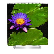 Bright Purple Water Lilly Shower Curtain