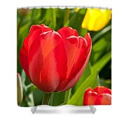 Bright Red Tulip Shower Curtain