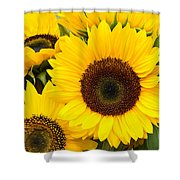 Bright Sunflower Blossoms Shower Curtain